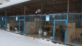 С начала года с улиц города отловлено 2710 безнадзорных собак